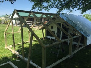 Building a Chicken Run - Leavenworth County